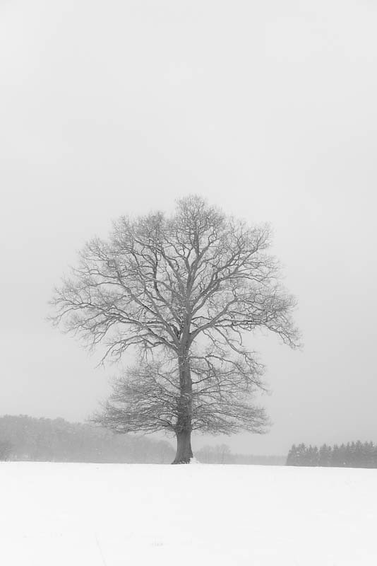 Lonely tree(s)